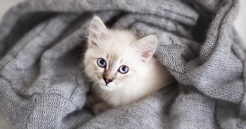 Exceptionnel Trucs et astuces pour votre nouveau chaton | Hôpital vétérinaire  TZ62