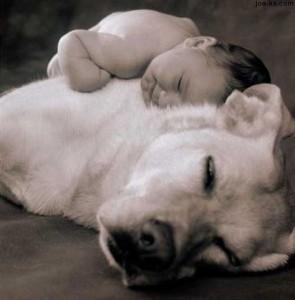 Chien et bébé: comment préparer votre chien à l'arrivée de votre bébé