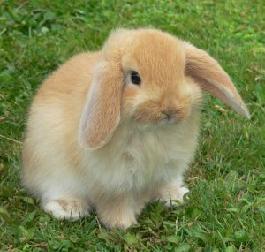 Trucs et astuces pour votre lapin