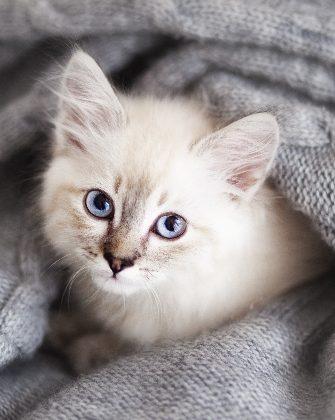 Trucs et astuces pour votre nouveau chaton