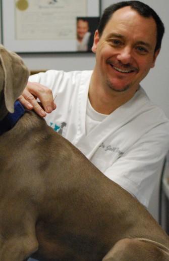 L'acupuncture : une alternative pour votre chien