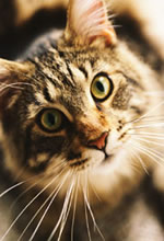 La gériatrie et votre chat